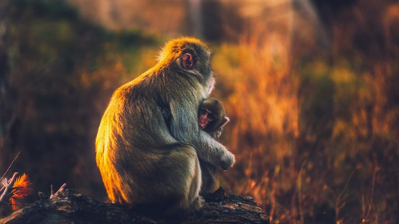 monkeys know the importance of hugging